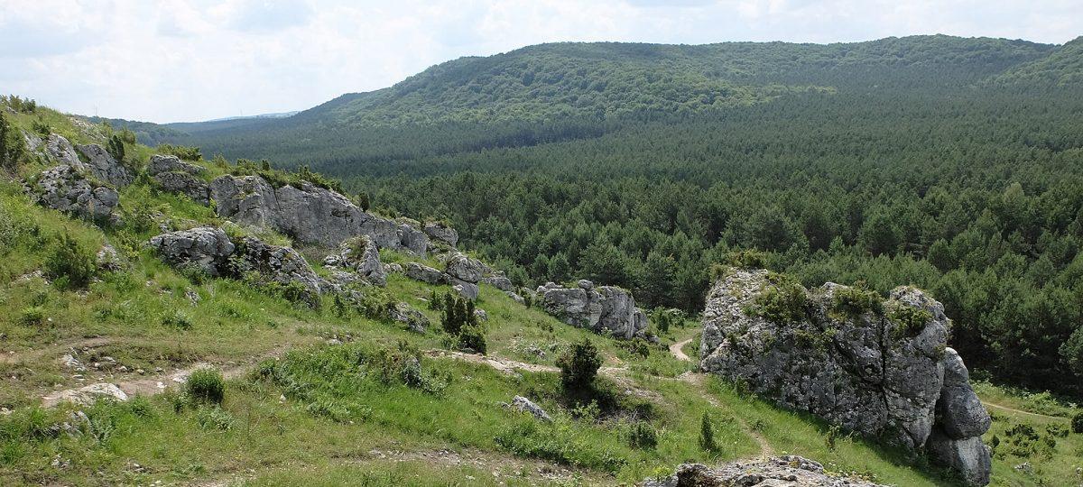Widok z Góry Biakło na Rezerwat Sokole Góry w Olsztynie