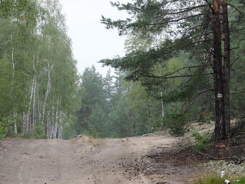 Piaszczyste pierwsze kilometry szlaku 7 dywizji piechoty, wrzesień 1939 r.
