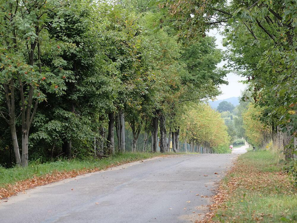 Ulica prowadząca z kuesty jurajskiej w Choroniu w stronę Biskupic
