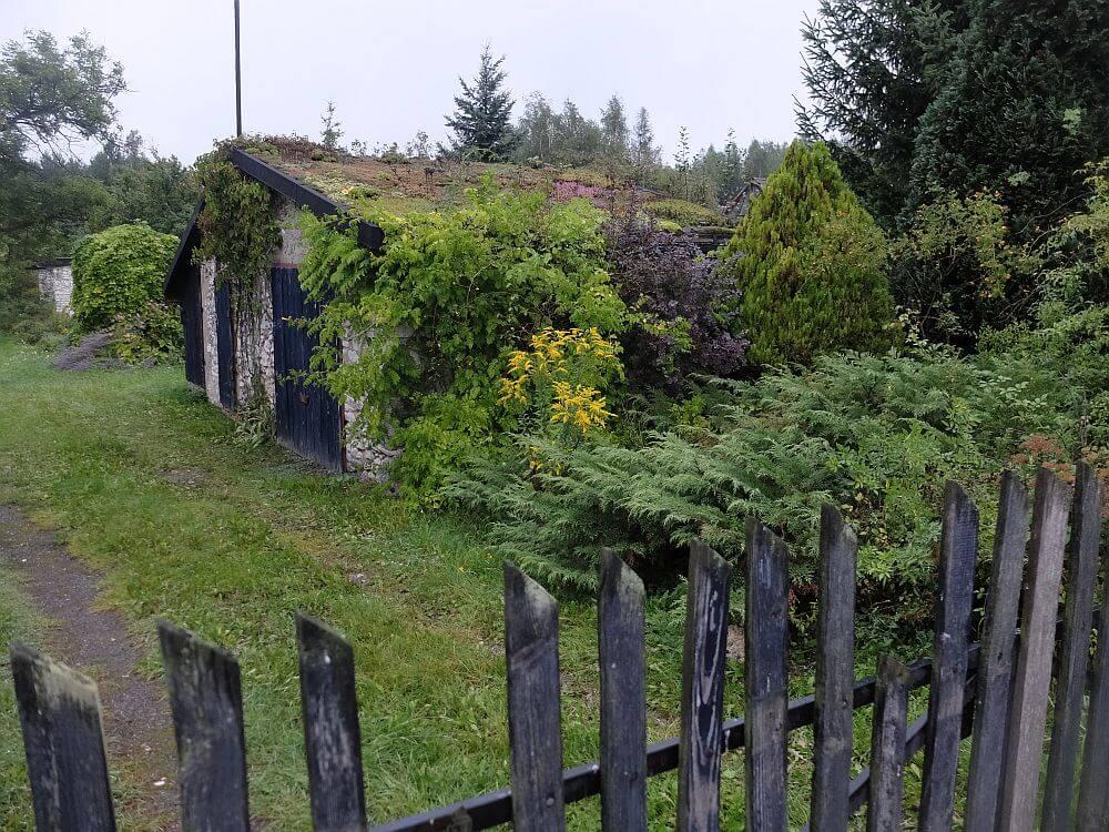Dom z zielonym dachem z sukulentami na szlaku 7. dywizji piechoty, wrzesień 1939 r.a