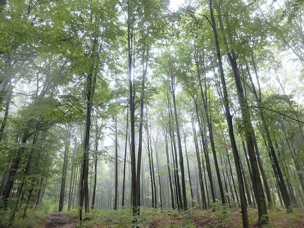 Las w sąsiedztwie Rezerwatu Parkowe w Złotym Potoku