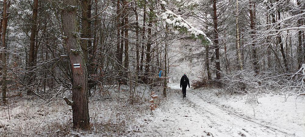 Leśny odcinek Szlaku Kroczyckiego