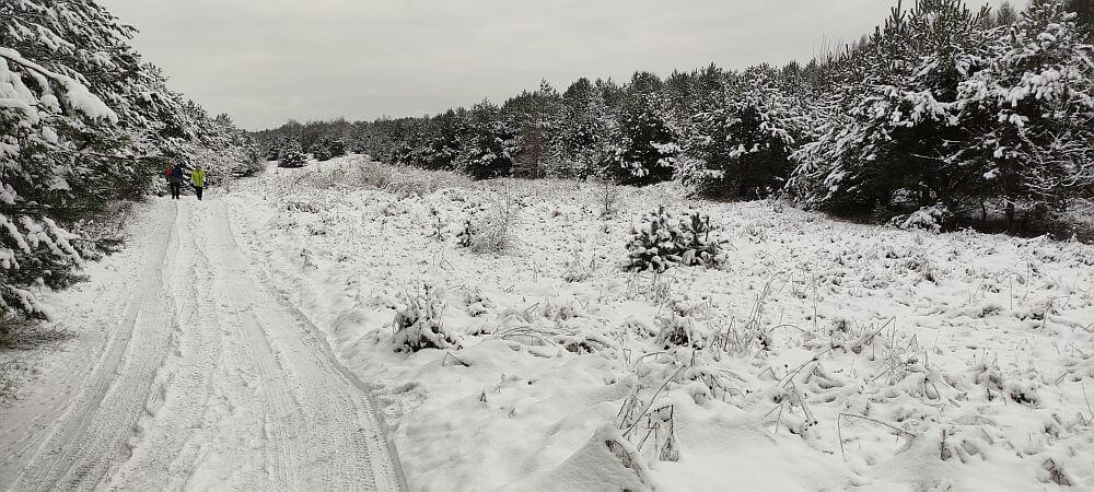 Poza leśny, lecz osłonięty odcinek Szlaku Kroczyckiego w pobliżu Rzędkowic