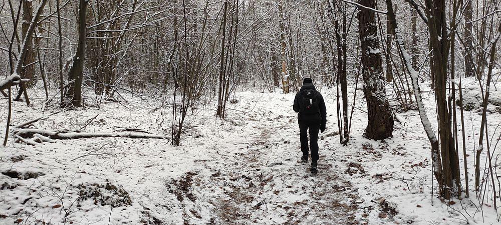 Czarny szlak na Górze Zborów to kilkaset metrów w gęstwinie lasu